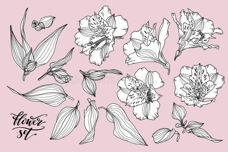 Vektorsamling av hand drog v?xter Den botaniska uppsättningen av skissar blommor, sidor och filialer Dragen Alstroemeriahand stock illustrationer