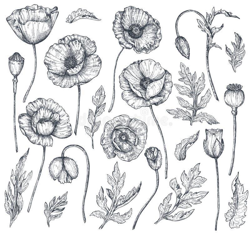 Vektorsamling av hand drog vallmoblommor stock illustrationer