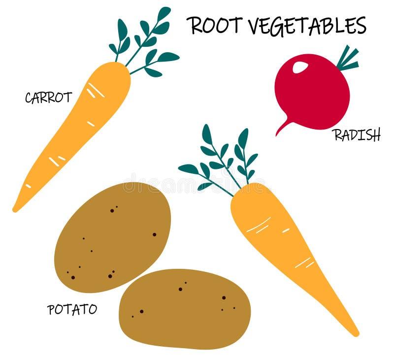 Vektorsamling av rota-sk?rd gr?nsaker - morot; potatis; r?disa S?songsbetonad mat stock illustrationer