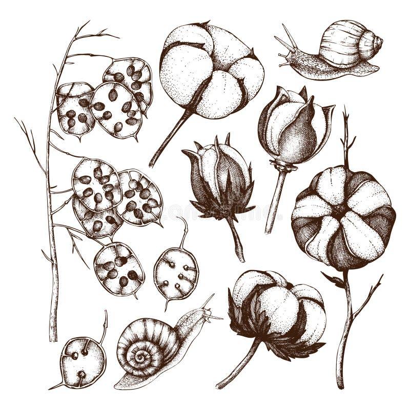 Vektorsamling av utdragna bomulls- och ärlighetfilialer för hand med sniglar Tappning ställde in av illustrationer för blommaknop stock illustrationer