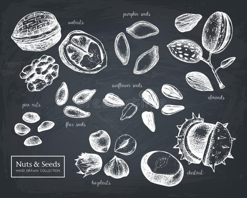 Vektorsamlingen av utdraget frö för hand och tokigt skissar Valnöten hasselnöten, mandeln, kastanj, sörjer muttern, solrosen, pum royaltyfri illustrationer
