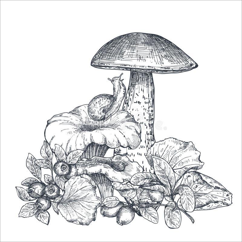 Vektorsammansättning av handen drog skogen plocka svamp med nedgångsidor, snigeln, tranbär vektor illustrationer