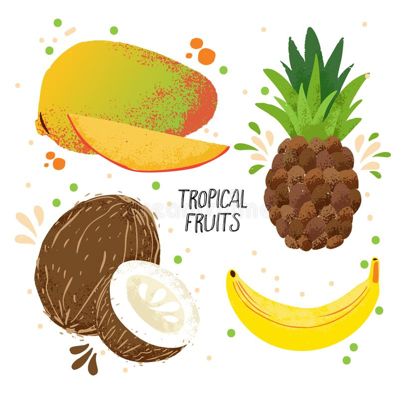 Vektorsatz des Handabgehobenen betrages tropische Früchte - Mango, Banane, Ananas und Kokosnuss lokalisiert auf weißem Hintergrun stock abbildung