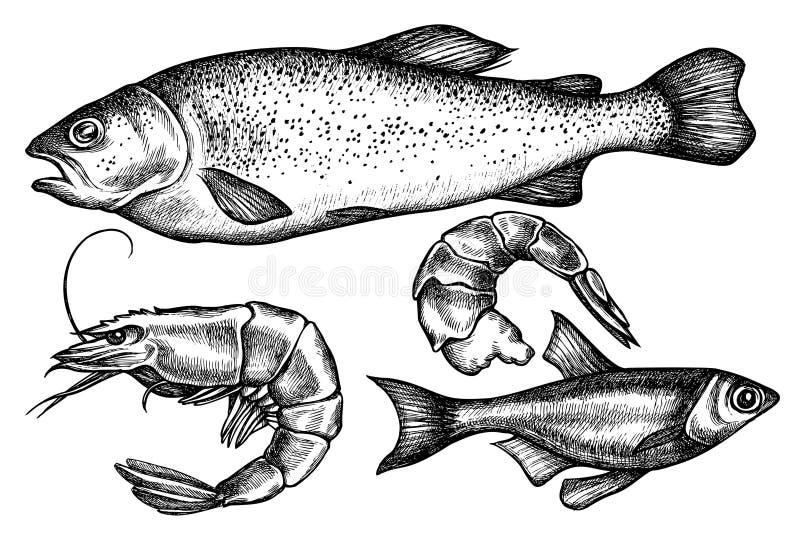 Vektorsatz Handgezogene Schwarzweiss-Fische, Garnele stockbild