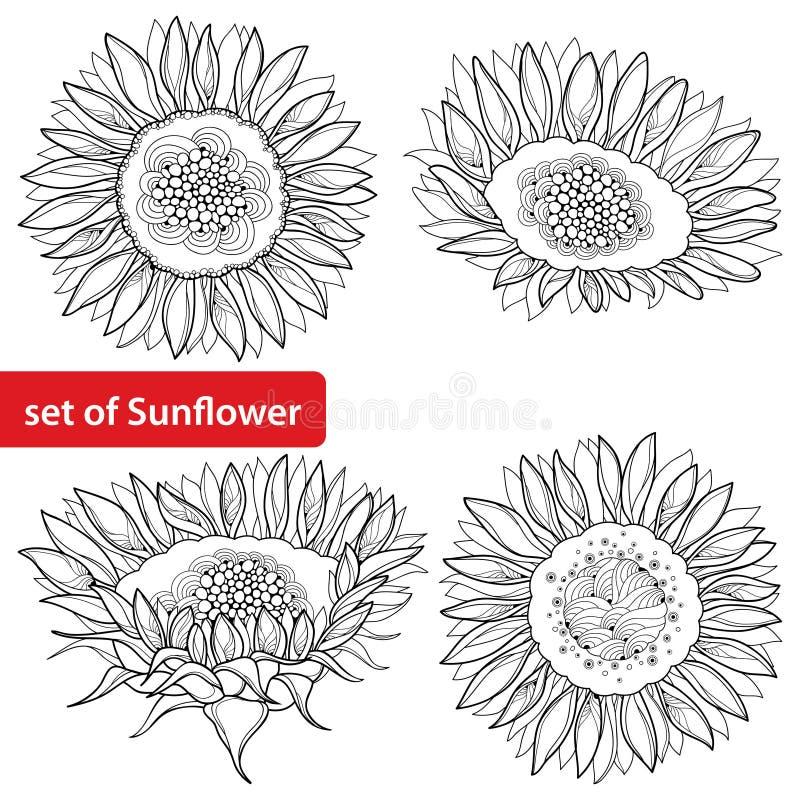 Vektorsatz mit Entwurf der offenen Sonnenblumen- oder Helianthusblume lokalisiert auf weißem Hintergrund Florenelemente in der Ko lizenzfreie abbildung
