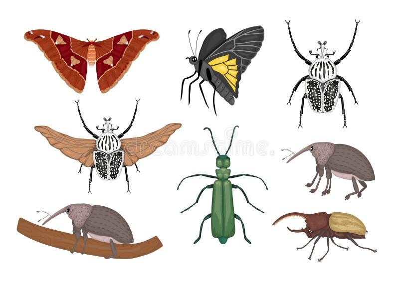 Vektorsatz tropische Insekten lizenzfreie abbildung