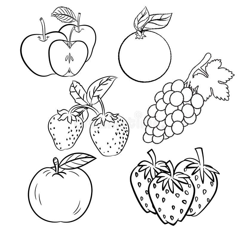 Vektorsatz unterschiedliche Hand gezeichnetes Fruchtvektorskizze Design vektor abbildung