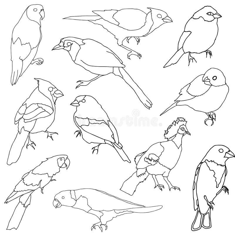 Vektorset verschiedene Sorte der Vögel. vektor abbildung