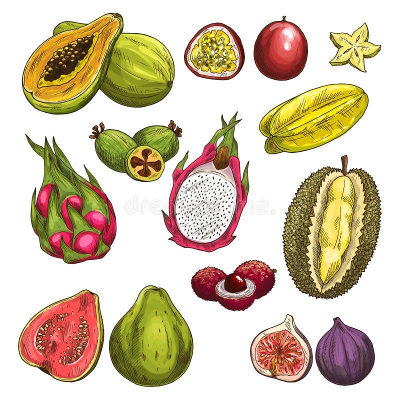 Vektorskizzenikonen von exotischen tropischen Früchten lizenzfreie abbildung