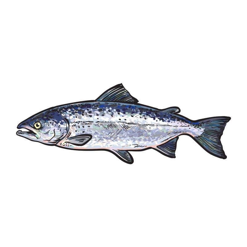 Vektorskizzenkarikatur-Seefischlachse lokalisiert lizenzfreie abbildung