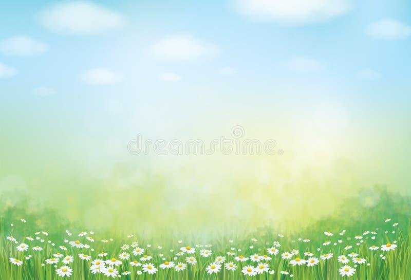 Vektorsommar, gräsplan, naturbakgrund stock illustrationer