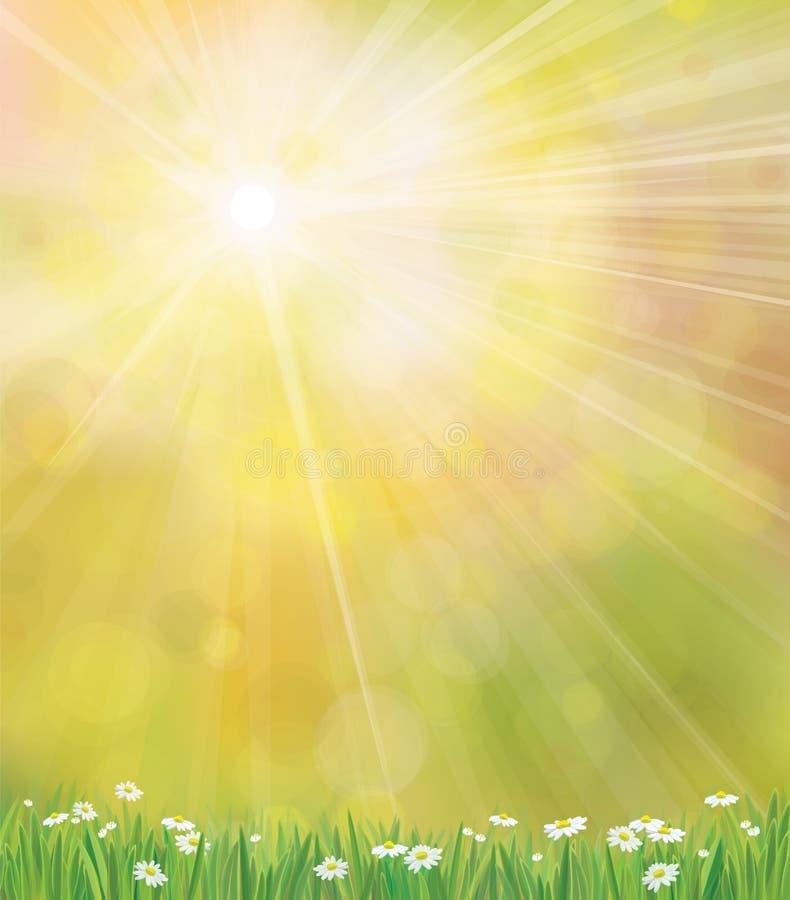 Vektorsonnenscheinhintergrund mit Gras und chamomi lizenzfreie abbildung