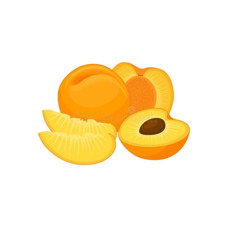 Vektorstillleben mit Aprikosen Fahne mit frischer Frucht lizenzfreie abbildung