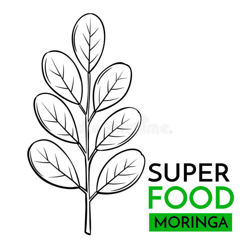 Vektorsymbolssuperfood moringa royaltyfri illustrationer
