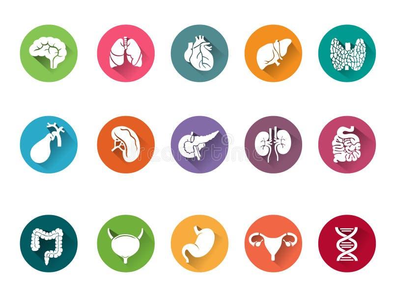 Vektorsymbolsuppsättning av mänskliga inre organ vektor illustrationer