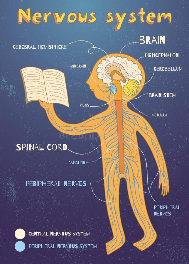 Vektortecknad filmillustration av den mänskliga nervsystemet för ungar vektor illustrationer