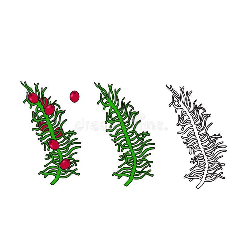 Vektorteckningsuppsättningen lämnar växtfilialen Ljus designbeståndsdel Använd som en klistermärke, dekorativ idé Element för jul vektor illustrationer