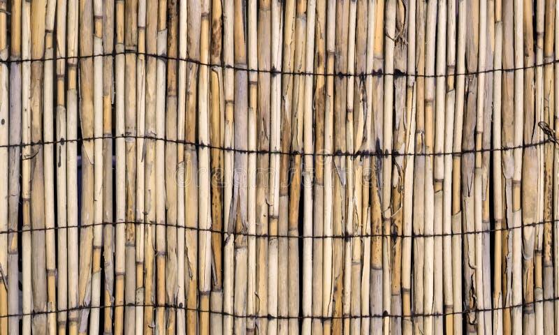 Vektortextur av väggen av destinerad bambu royaltyfri illustrationer