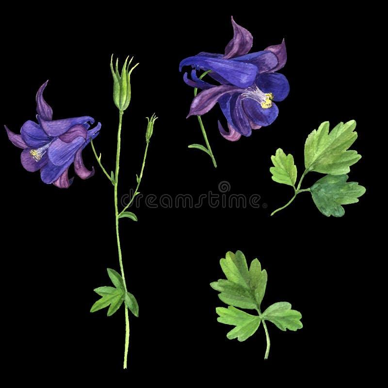 Vektoruppsättning av blommor för vattenfärgteckningsriddarsporre royaltyfri illustrationer
