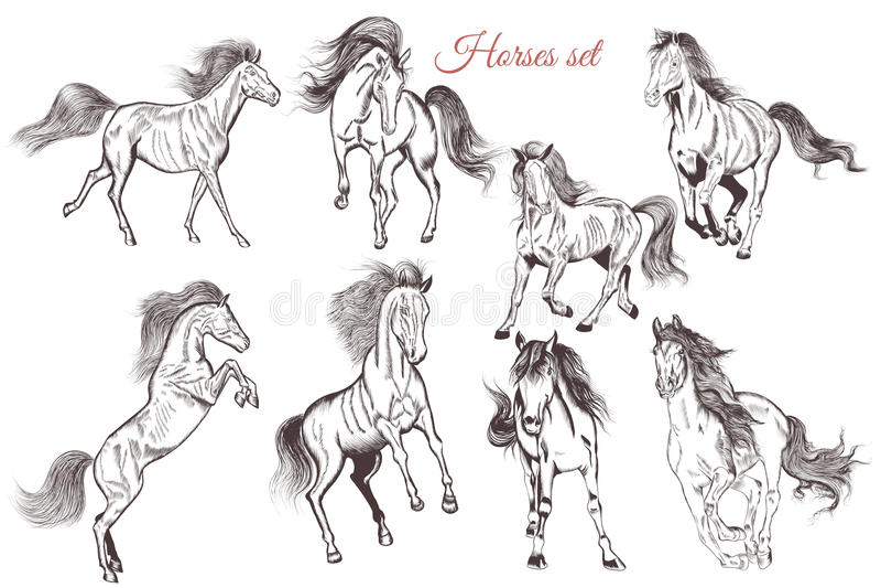 Vektoruppsättning av detaljerad hand drog hästar för design vektor illustrationer