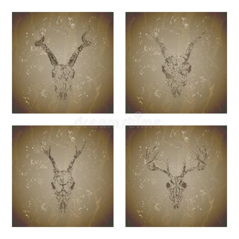 Vektoruppsättning av fyra illustrationer med grungekonturskallar hjortar, antilop, fullvuxen hankronhjort och get på tappningbakg vektor illustrationer