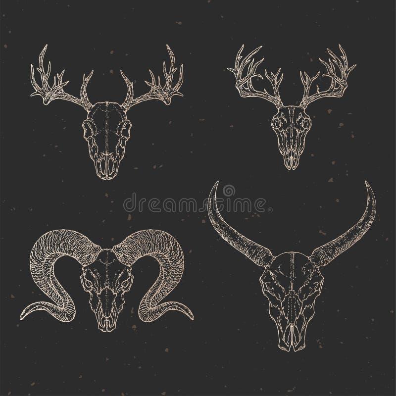 Vektoruppsättning av fyra utdragna skallar för hand av lös buffel, hjortar och RAM på mörk bakgrund med tappningbeståndsdelar Ski vektor illustrationer
