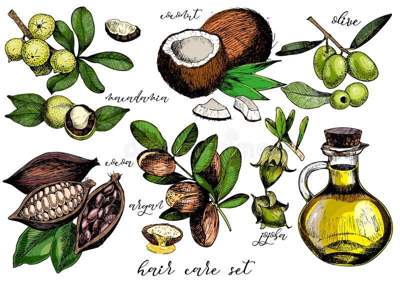 Vektoruppsättning av ingredienser för håromsorg Oliv, argan, kokosnöt, kakao, macadamia, jojoba och olje- flaska vektor illustrationer