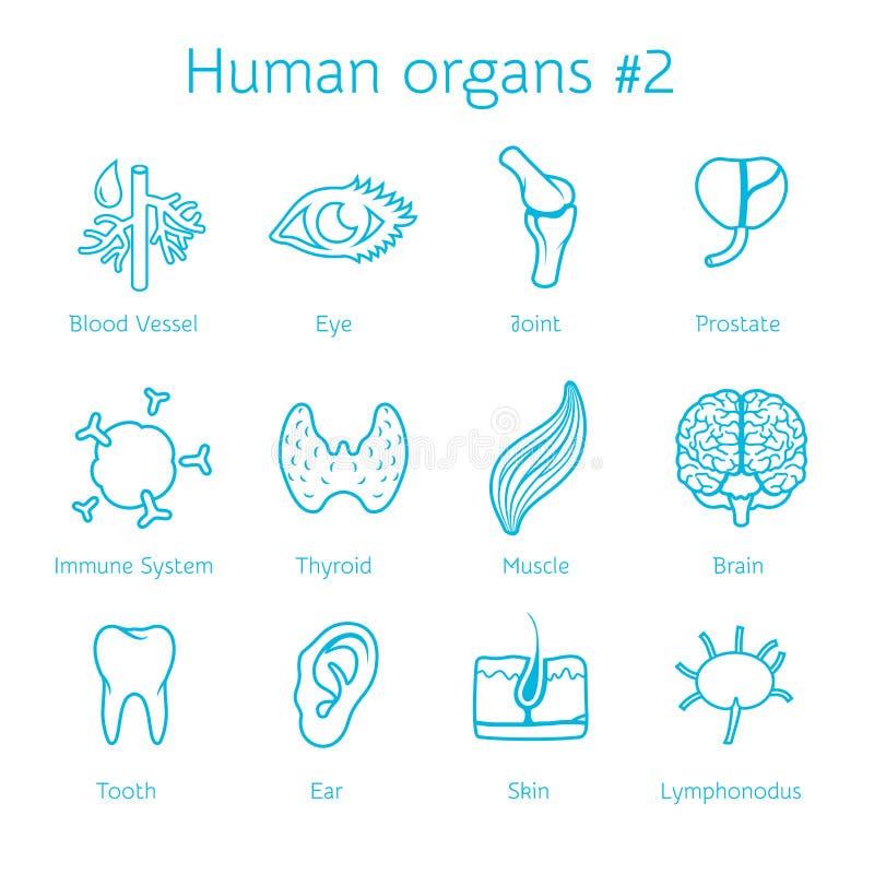 Vektoruppsättning av kontursymboler med mänskliga organ royaltyfri illustrationer