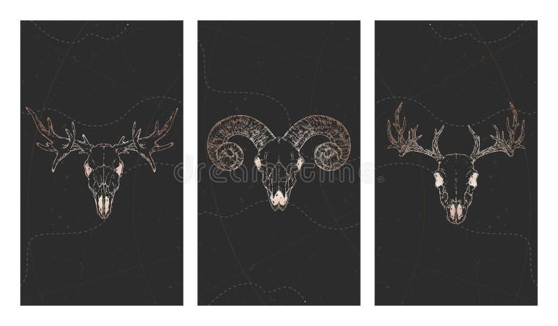 Vektoruppsättning av tre illustrationer med guld- skallar hjortar, älg, RAM och grungebeståndsdelar på svart bakgrund royaltyfri illustrationer