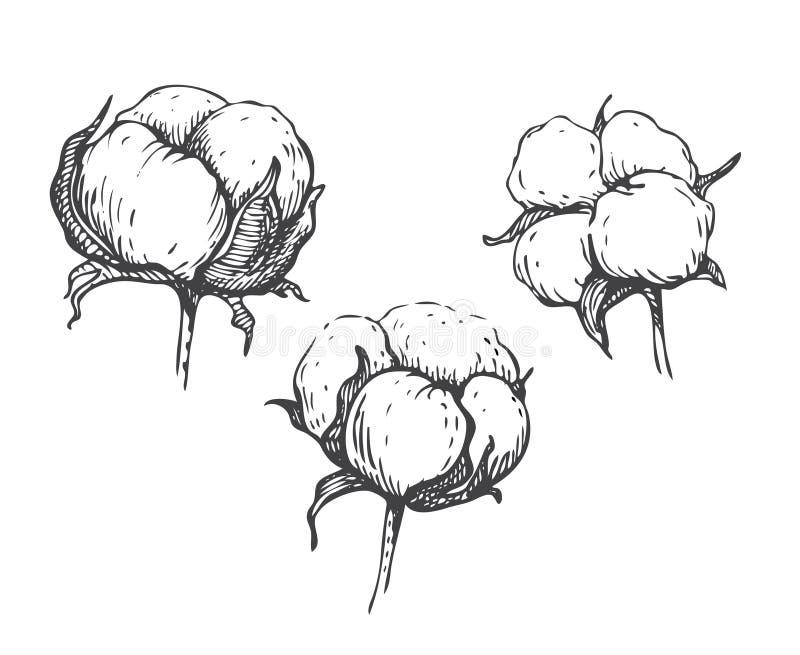 Vektoruppsättning av växten för bomull för handattraktionfärgpulver royaltyfri illustrationer