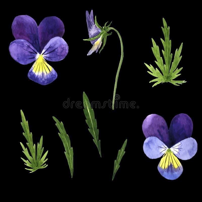 Vektoruppsättning av vattenfärgen som drar violetblommor royaltyfri illustrationer