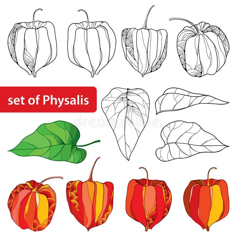 Vektoruppsättning med översiktsphysalis- eller uddekrusbäret eller körsbärsröd frukt för jordning, bladet och bäret som isoleras  vektor illustrationer