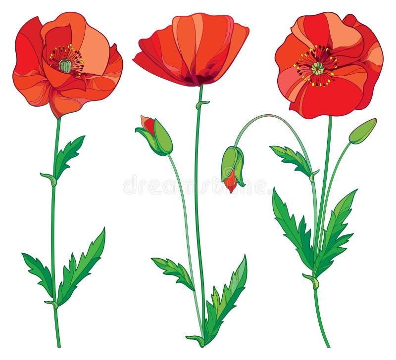 Vektoruppsättning med den röda vallmoblomman för översikt, knoppen och gräsplansidor som isoleras på vit bakgrund Blom- beståndsd vektor illustrationer