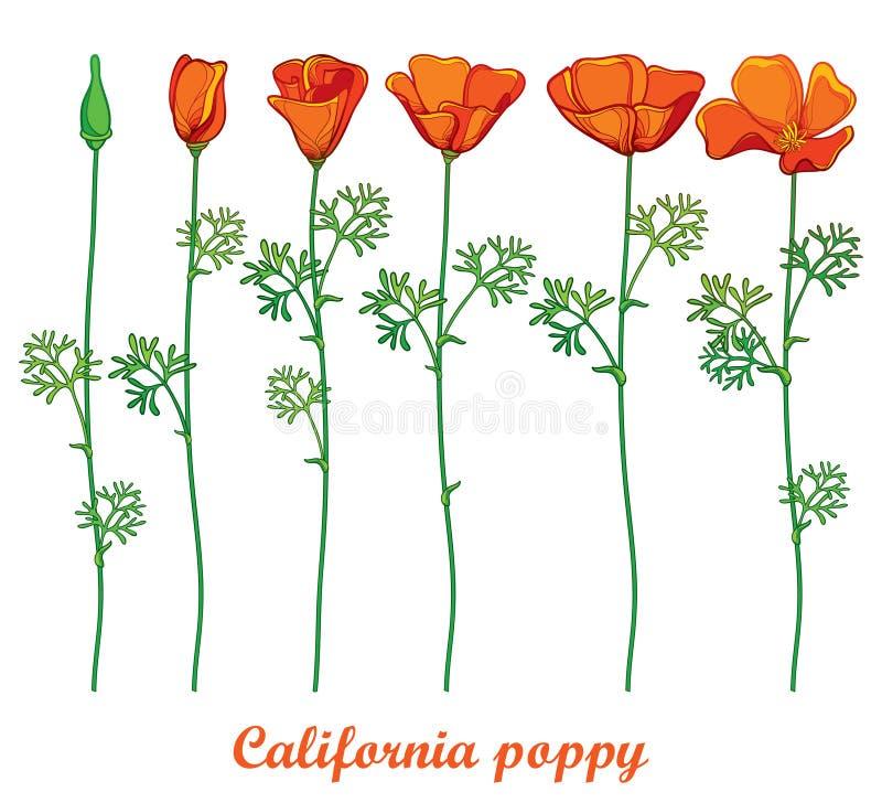 Vektoruppsättning med för Kalifornien för översikt den orange blomman vallmo eller Kalifornien solljus eller isolerade Eschscholz vektor illustrationer