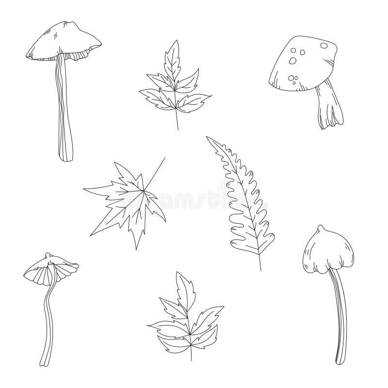 Vektoruppsättningen av champinjoner och isolerade översikten för höst den växter skissar royaltyfri illustrationer