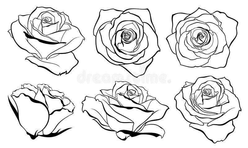 Vektoruppsättningen av den detaljerade isolerade översiktsrosknoppen skissar i svart färg royaltyfri illustrationer