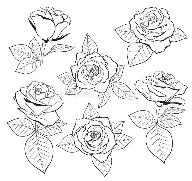 Vektoruppsättningen av den detaljerade isolerade översiktsrosknoppen skissar med sidor i svart färg vektor för designillustration royaltyfri illustrationer