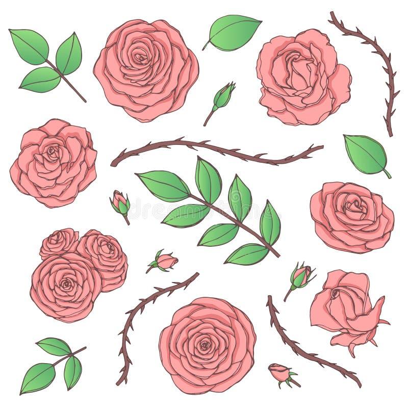 Vektoruppsättningen av rosa färgrosen blommar med knoppar, sidor och den taggiga stamlinjen konst som isoleras på den vita bakgru stock illustrationer
