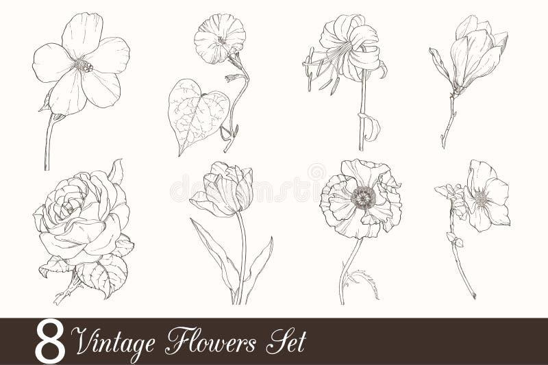 Vektoruppsättningen av 8 tappningteckningsblommor med tulpan, vallmo, iris, steg, magnolian, i klassisk Retro stil royaltyfri illustrationer