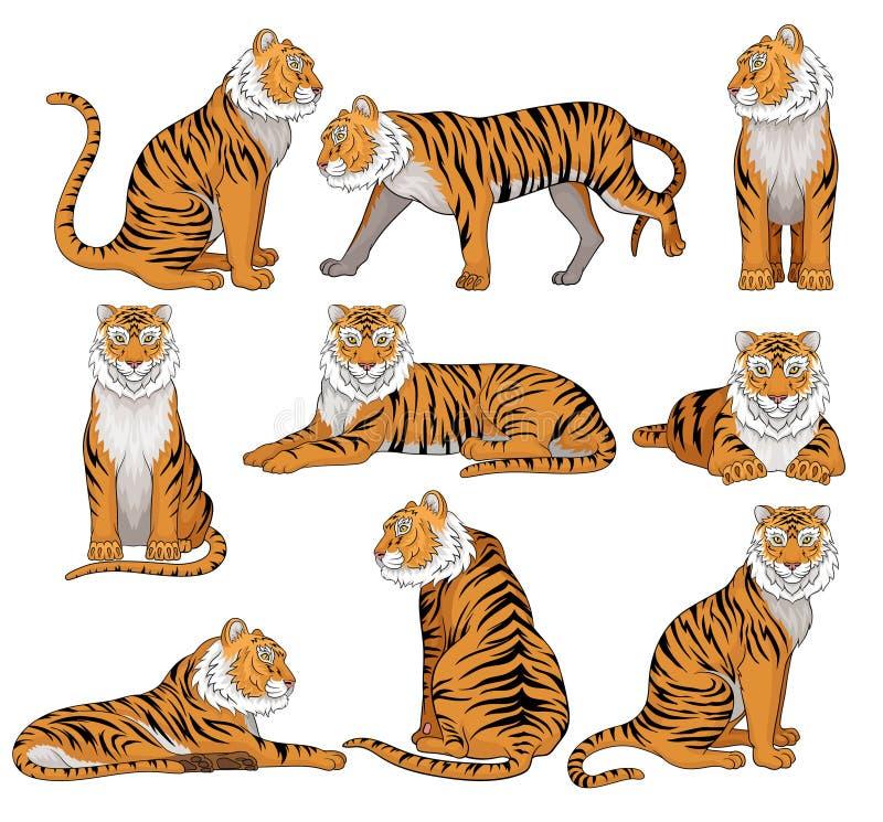 Vektoruppsättningen av tigern i olikt poserar Stor lös katt med orange päls- och svartband Kraftigt rov- djur vektor illustrationer