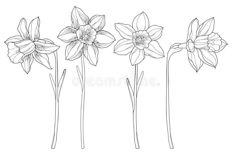 Vektoruppsättningen med den översiktspingstliljan eller påskliljan blommar i svart som isoleras på vit bakgrund Blom- beståndsdel vektor illustrationer