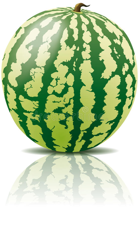 Vektorwassermelonefrucht lizenzfreie abbildung