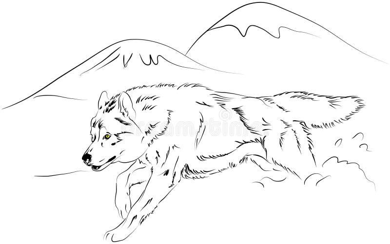 vektorwolf vektor illustrationer