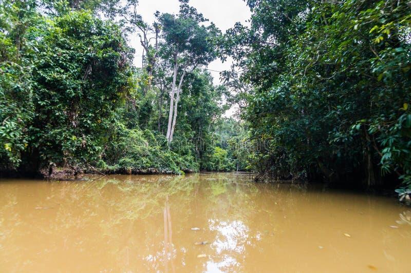Vela ao longo da floresta úmida luxúria ao longo da água amarela de Sabah, carregada foto de stock