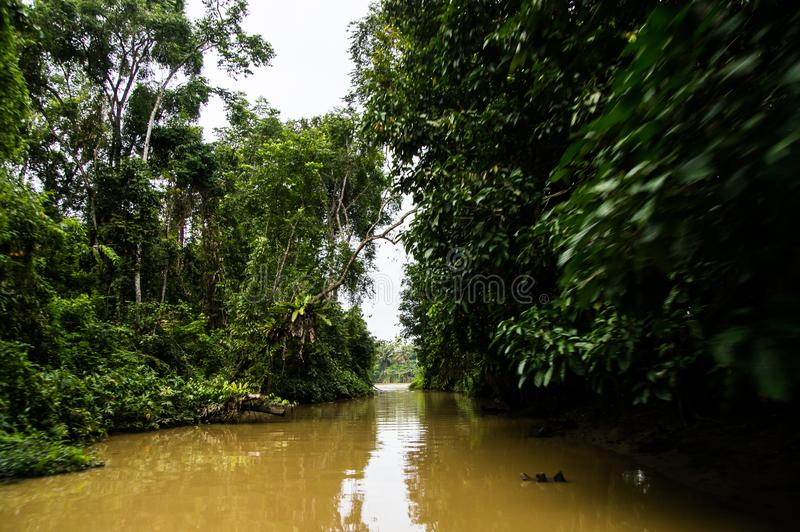 Vela a lo largo de la selva tropical enorme a lo largo del agua amarilla de Sabah, fotos de archivo libres de regalías