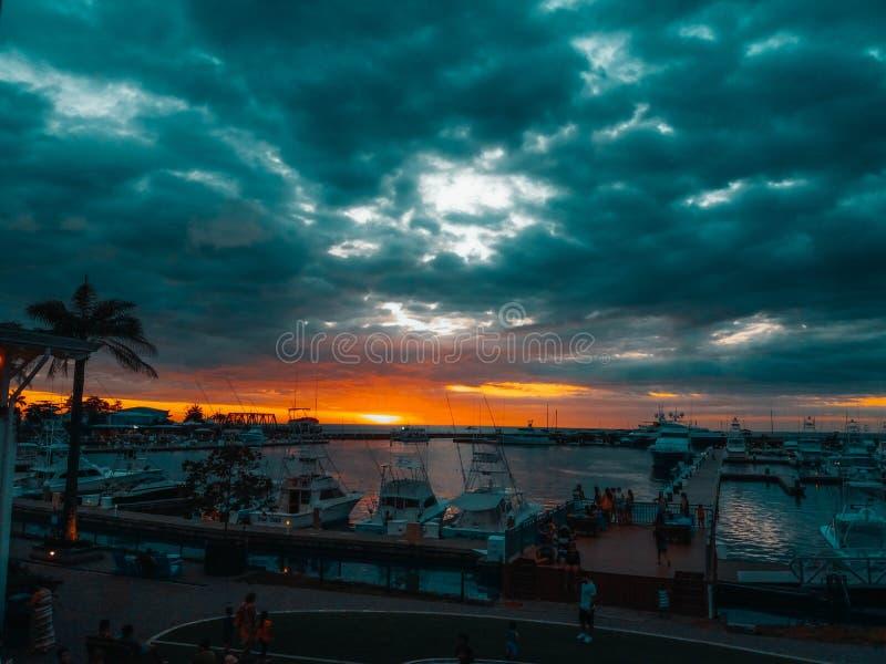 Vela marinhos do pez em Costa Rica fotografia de stock royalty free
