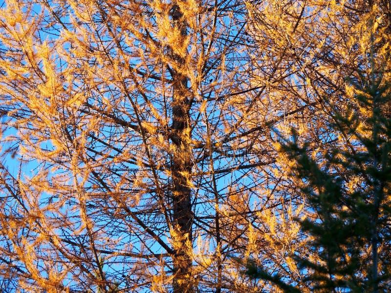 Velar el árbol foto de archivo libre de regalías
