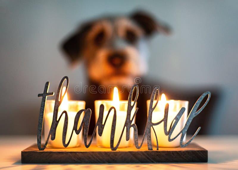 Velas agradecidas de la gratitud con el perro en fondo fotografía de archivo