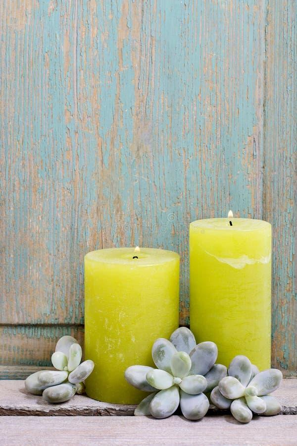 Velas scented verde e plantas suculentos imagens de stock royalty free