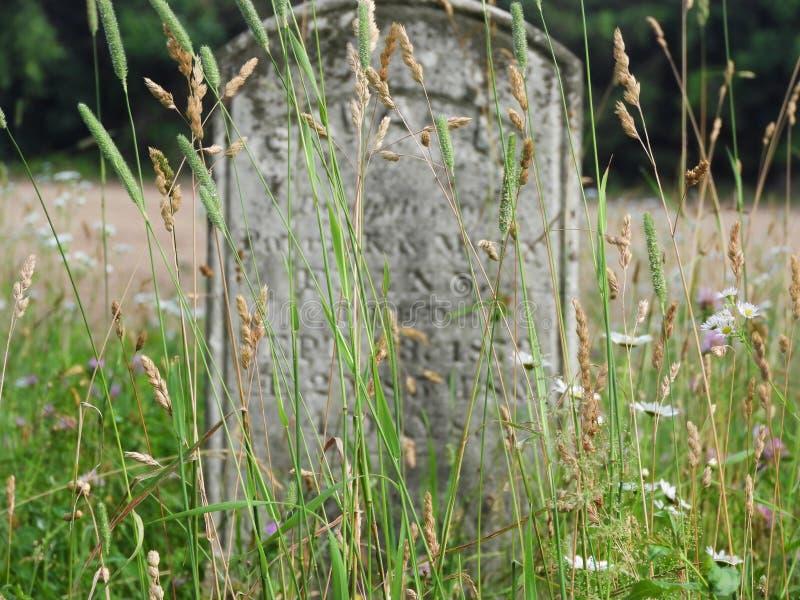 Veldgras omringt oude gravesteen stock afbeeldingen